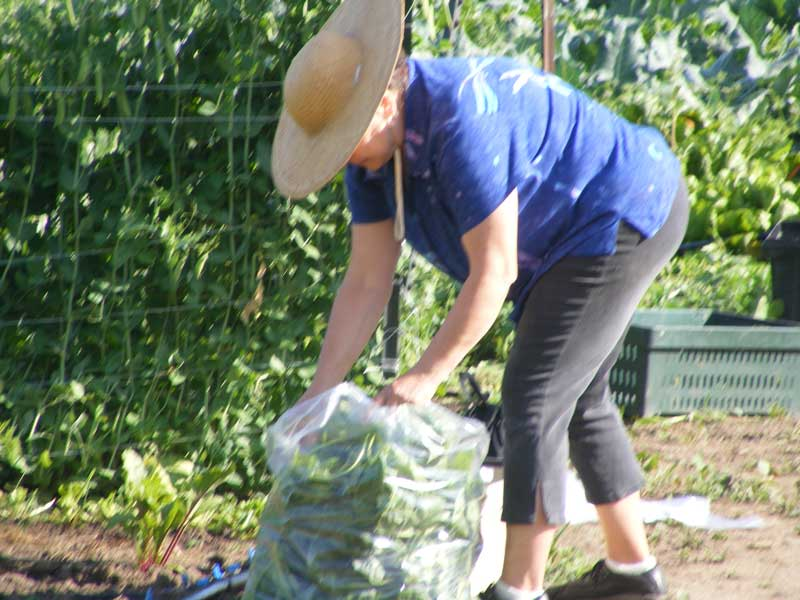 Collecting & Packing Produce